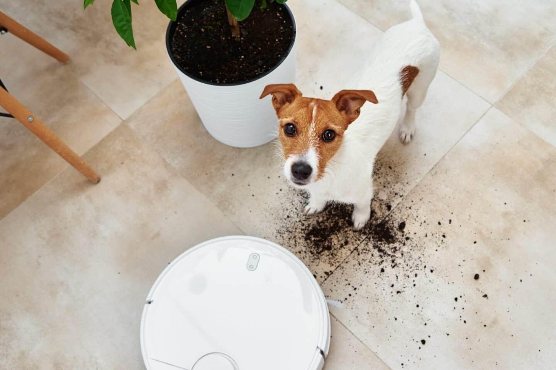 Die besten Saugroboter für Hundehaare 2021: Tierbesitzer aufgepasst! Alle Infos zur Reinigung