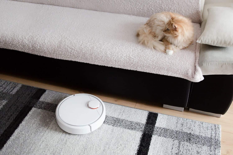 Saugroboter fuer Katzen Katze auf dem Couch