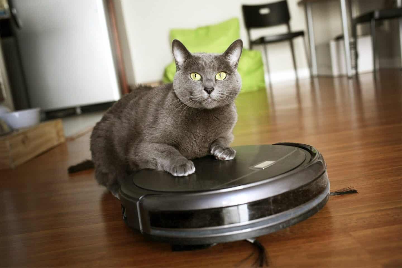 Saugroboter für Katzen 2021: Alle Tipps im Umgang & Modelle im Kampf gegen Katzenhaare und Katzenstreu