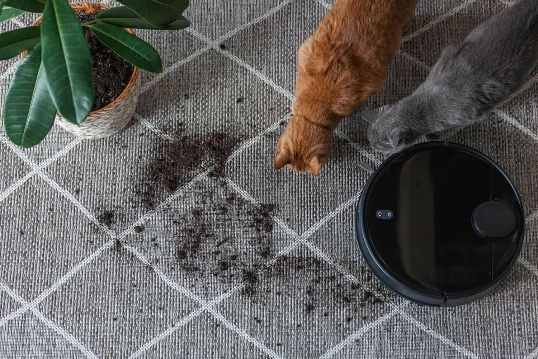 Saugroboter fuer Katzen Teppiche saugen