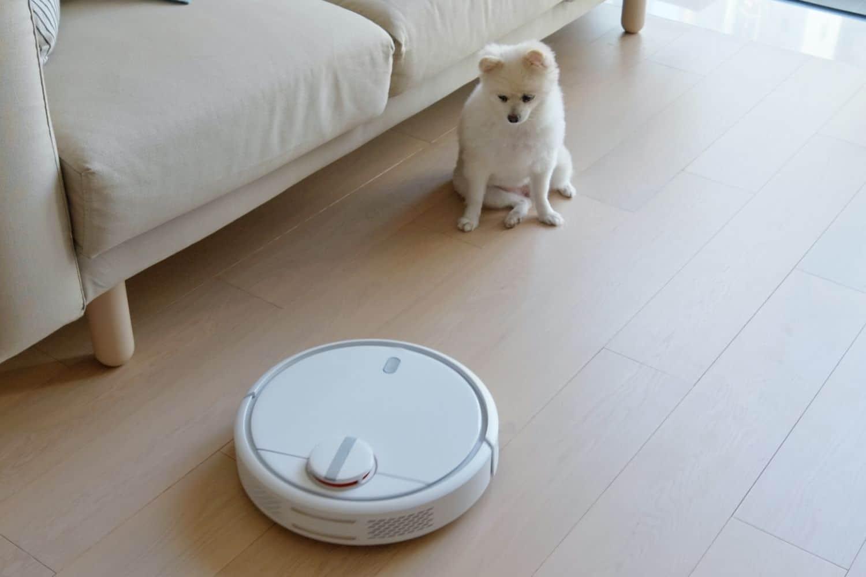Saugroboter vs Hund